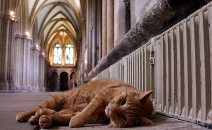 Cat Architecture: Louis the Cathedral Cat Wells Cathedral