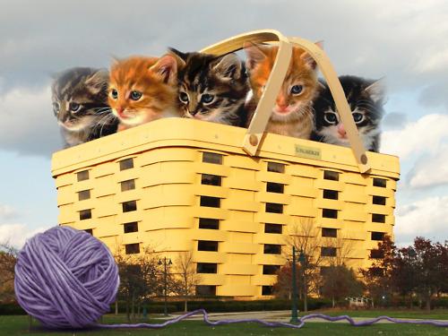 Cat Architecture