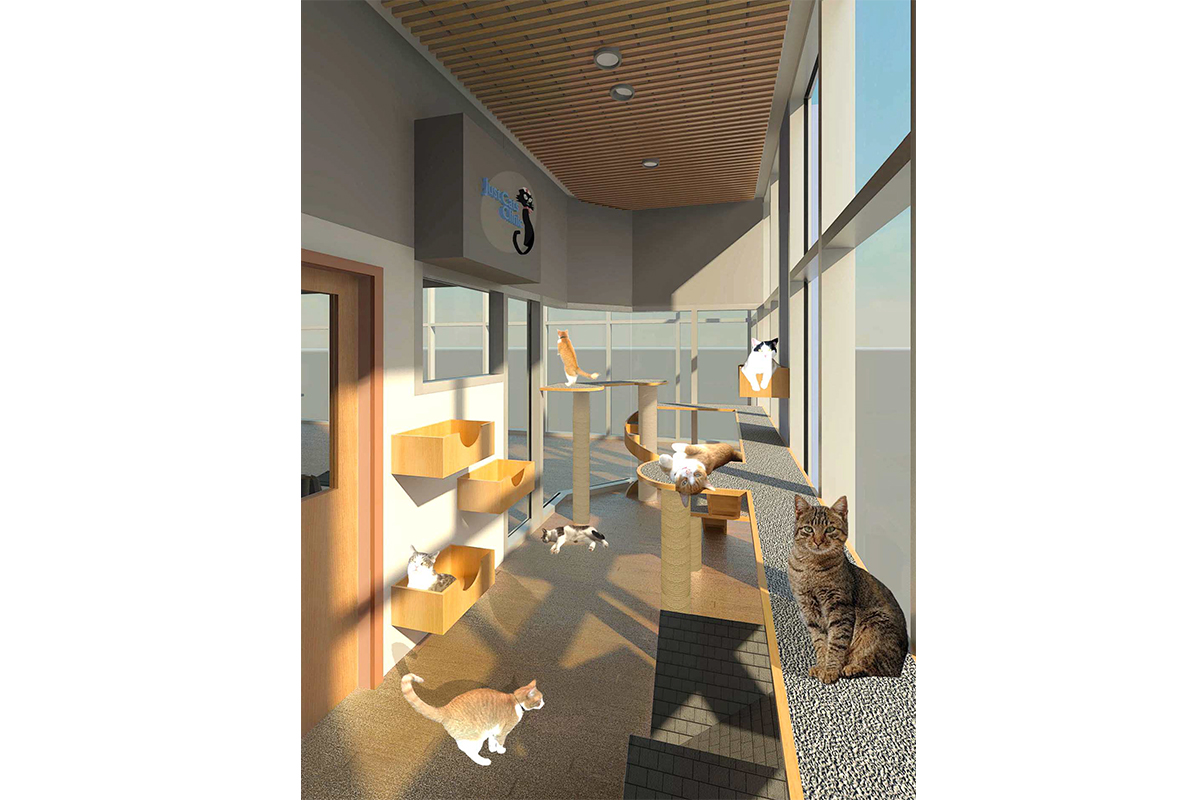 just cats clinic architecture