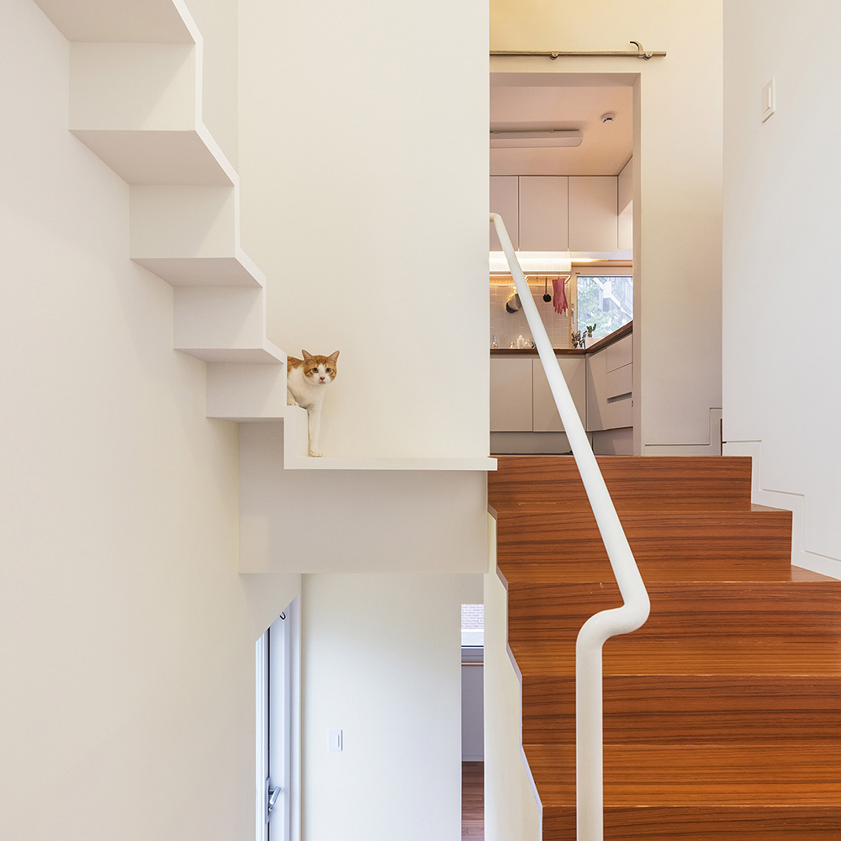 cat friendly house architecture